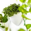 Botaniq Flowerpots
